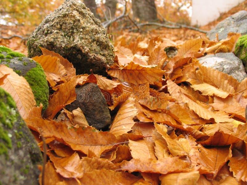 Autumn 3 Free Stock Photography