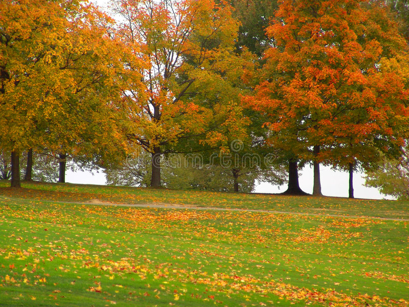Download Autumn stock image. Image of october, grass, autumn, tree - 301579