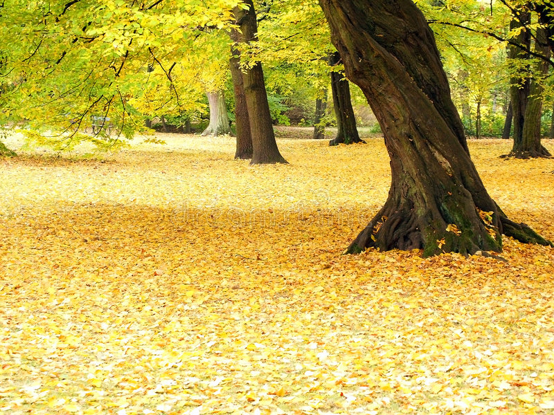 Download Autumn stock image. Image of view, glow, fallen, branches - 301851