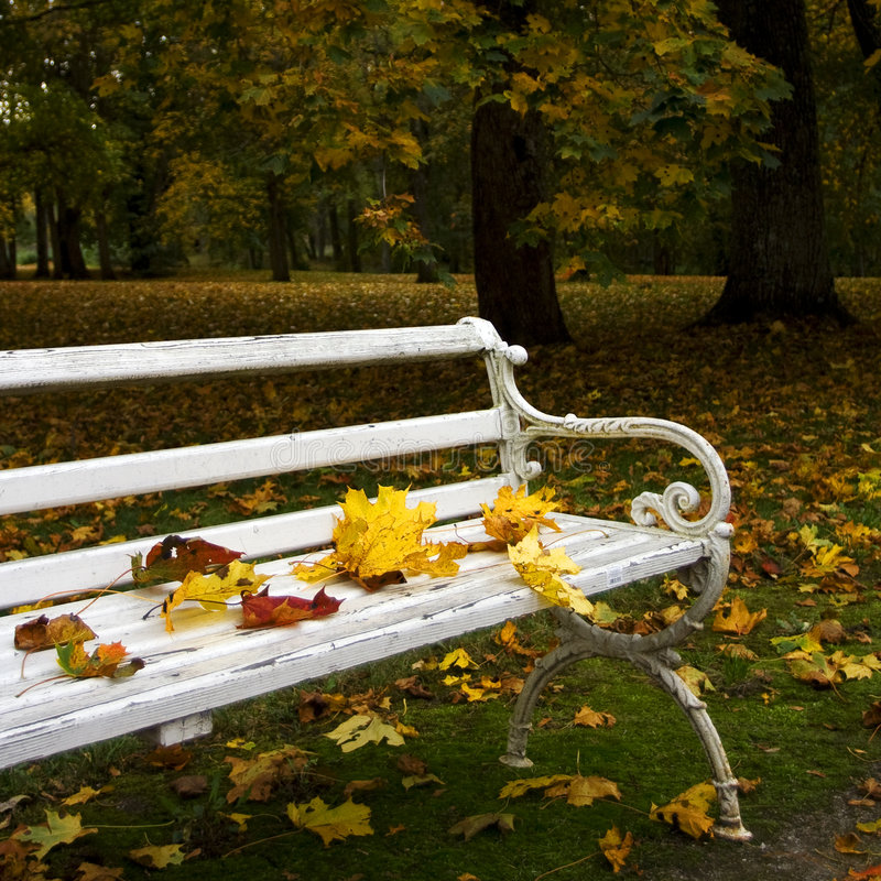 Free Autumn Stock Photo - 3319050