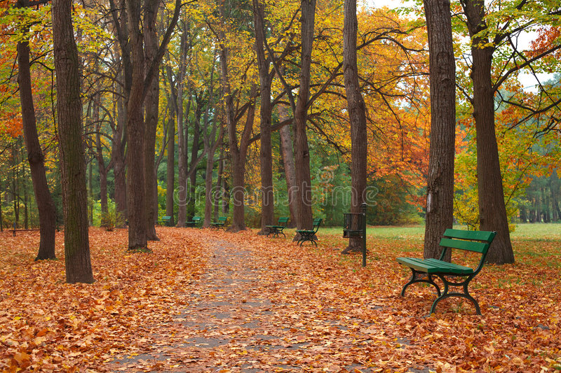 Autumn. Scenery - colorful trees in park royalty free stock photography