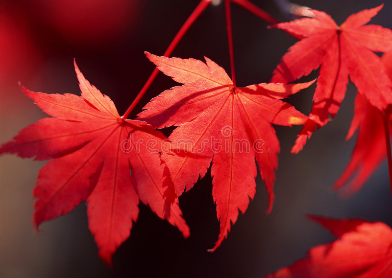 Autumn. Leaves in West Virginia royalty free stock photos