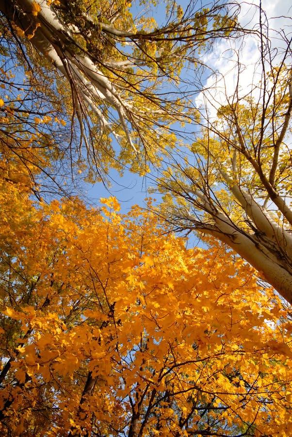 Free Autumn Royalty Free Stock Photos - 3625498