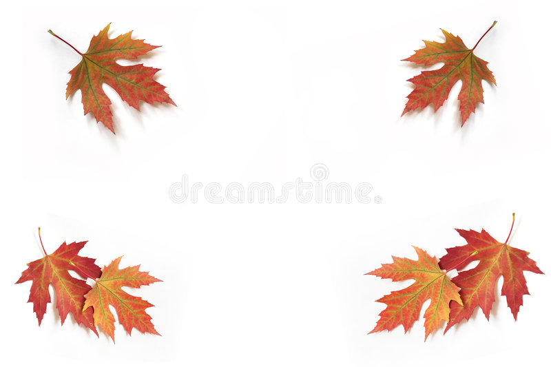 autumn 5 liści jesienią obraz stock