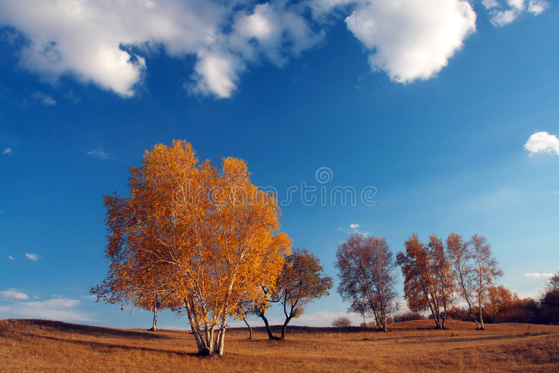 Autumn. This is a autumn image stock photo