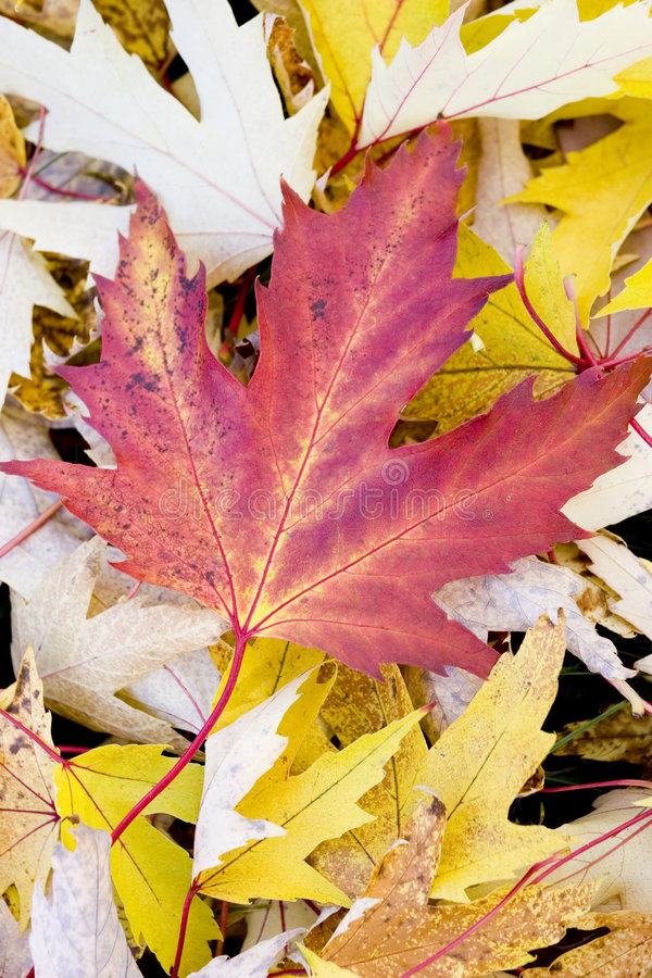 Download Autumn stock photo. Image of winter, seasons, yellow, ground - 5359732