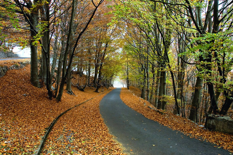 Download Autumn stock image. Image of shadow, street, upstream - 6012535