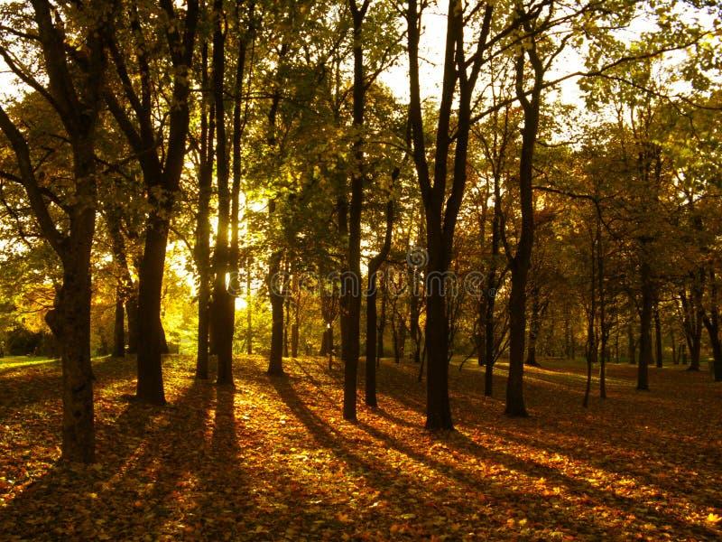 Autumn. Beautiful yellow autumn in wood stock photo