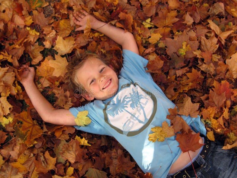 Download Autumn stock image. Image of bole, deciduous, color, harvest - 6891491