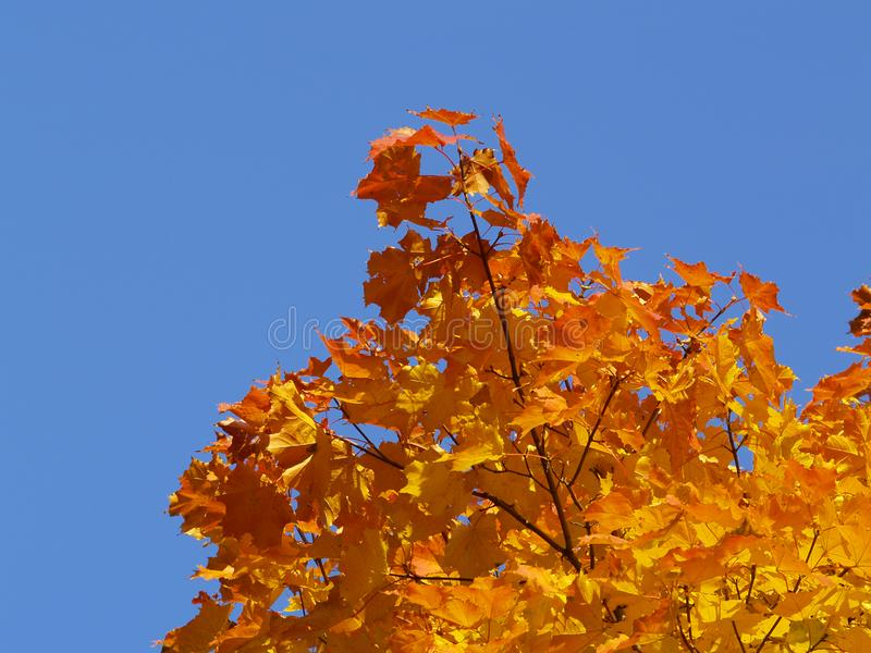 Autumn [7] Stock Images