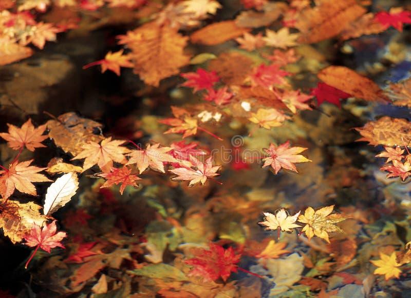 Autumn. Scenery of Autumn stock photos
