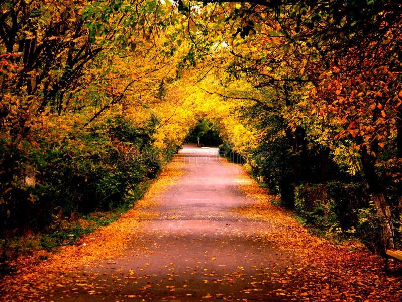 Autumn. Late autumn, fallen leaves- beautiful view!!! Autumn/October/ 2008 royalty free stock photos