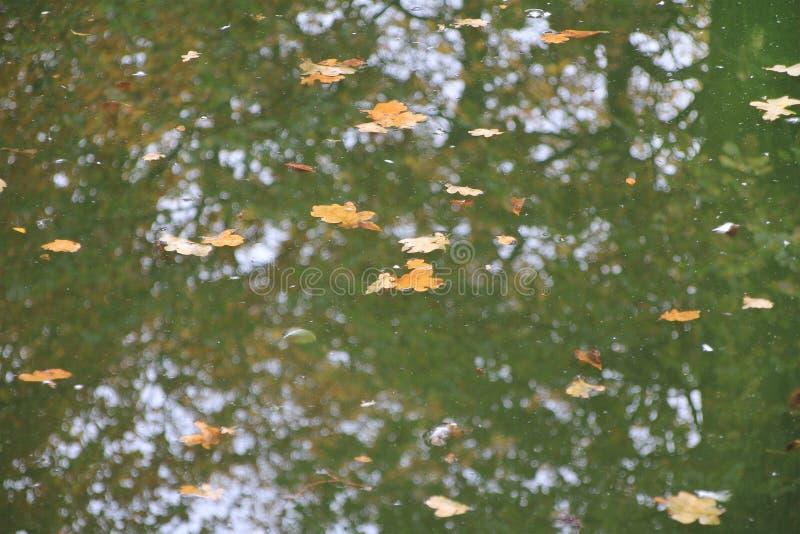 Autumn, abandoned pond stock photography