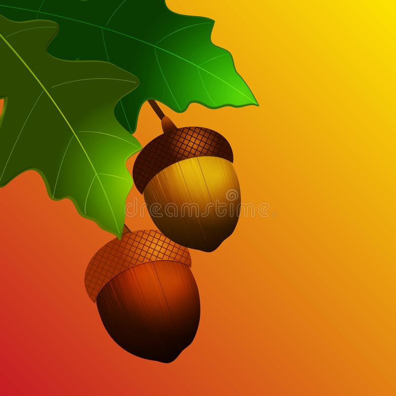 Autumn acorn with leafs on yellow and red background vector illustration