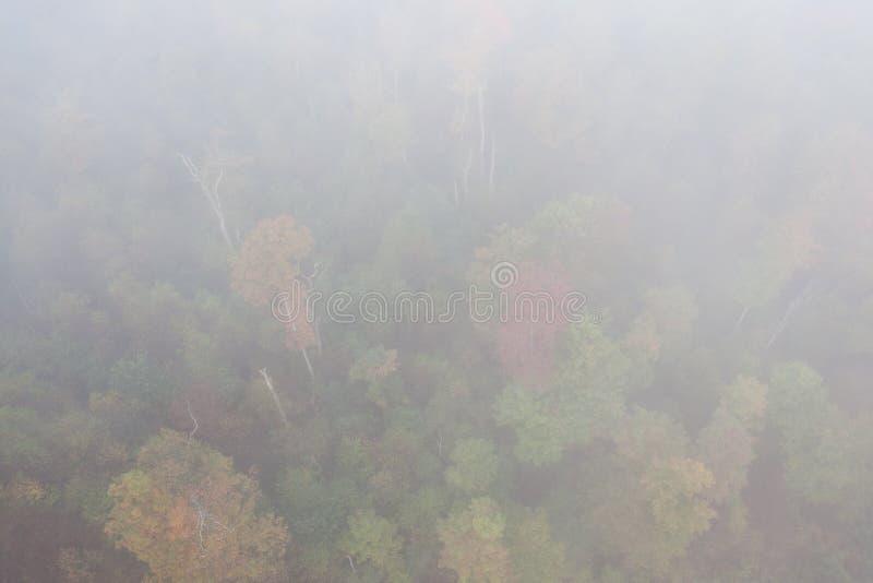 Autumn Aerial mit Fall-Farben in Allegheny-staatlichem Wald stockbilder