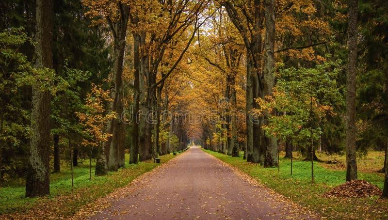 Autumn Alley lizenzfreies stockbild