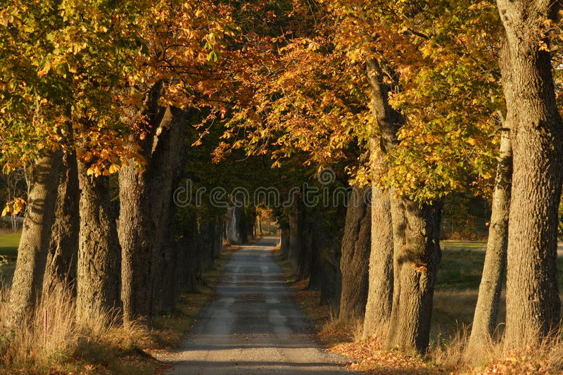 Autumn alley royalty free stock image