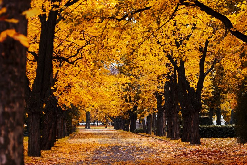 Download Autumn alley stock image. Image of passing, countryside - 1433521