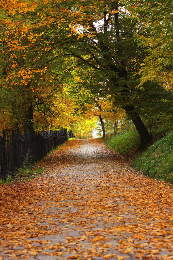 Download Autumn alley stock image. Image of autumn, orange, path - 16758511