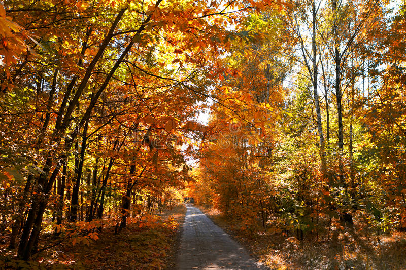 Download Autumn alley stock image. Image of leaf, park, autumn - 21449205