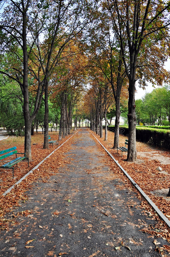 Download Autumn Alley stock image. Image of brown, destination - 27350141