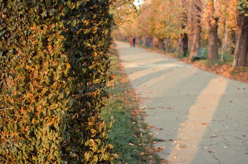 Autumn Alley image stock