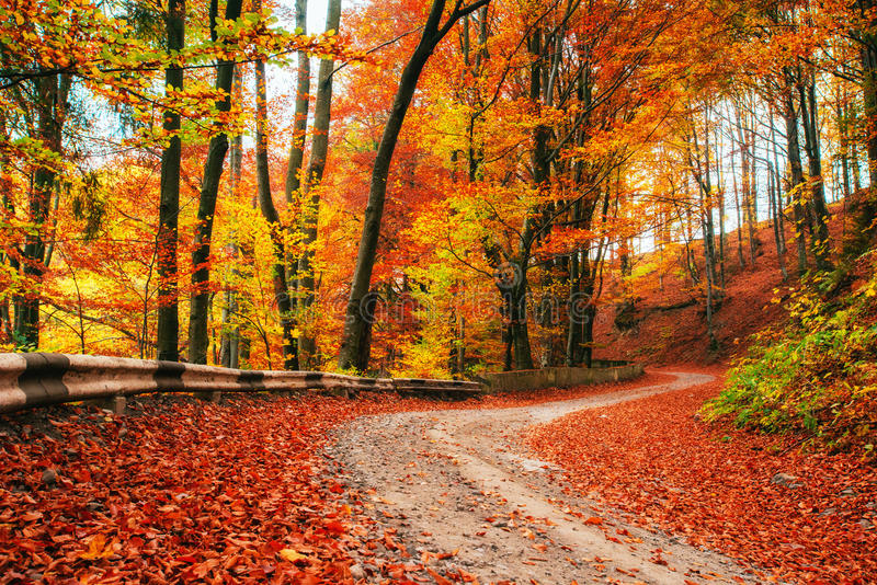 Autumn alley. Beauty world. Carpathians Ukraine Europe. Autumn alley. Beauty world Carpathians Ukraine. Europe stock photos