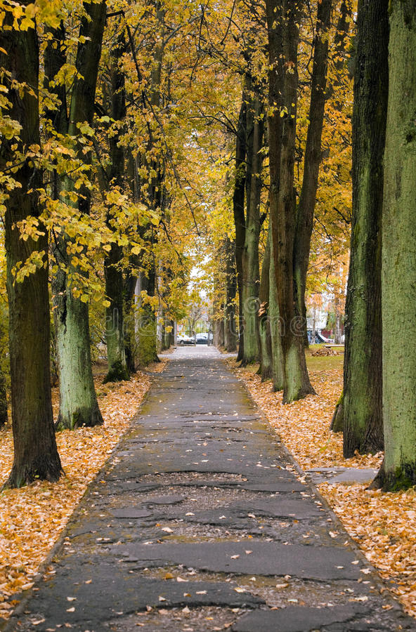 Autumn alley in a city