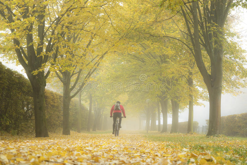 Autumn alley with fallen leaves and mist. Fog in autumn park royalty free stock image