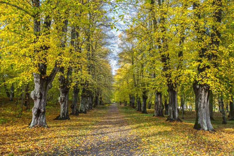 Autumn alley. royalty free stock image