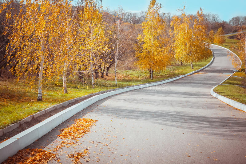 Autumn alley. In the morning in the park royalty free stock photo