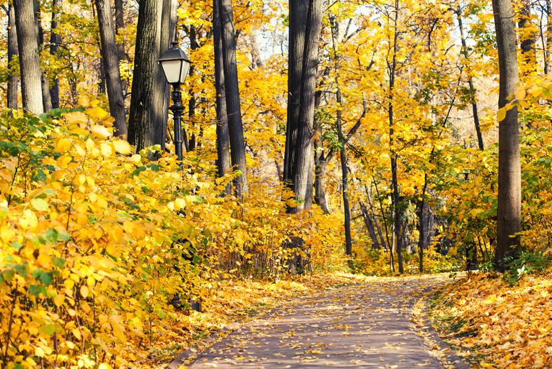 Autumn alley park landscape. Fall season nature landscape with pathway, yellow leaves tree background royalty free stock photography