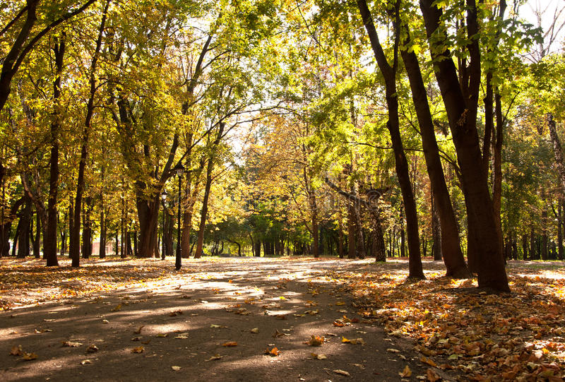 Download Autumn alley in a park stock image. Image of fall, leaves - 33305097