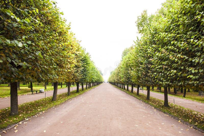 Autumn Alley in St. Petersburg royalty-vrije stock afbeelding