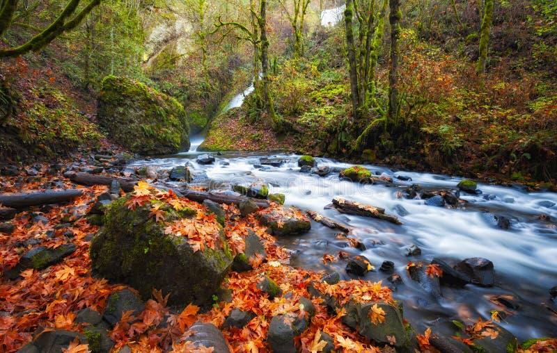 Autumn Along Bridal Veil Creek Columbia River Gorge. Autumn leaves litter the banks of Bridal Veil Creek in the Columbia River Gorge stock photography