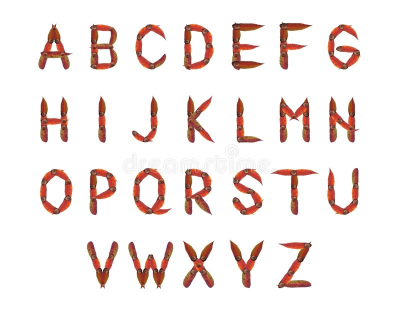 Download Autumn alphabet stock photo. Image of type, technical - 21990104