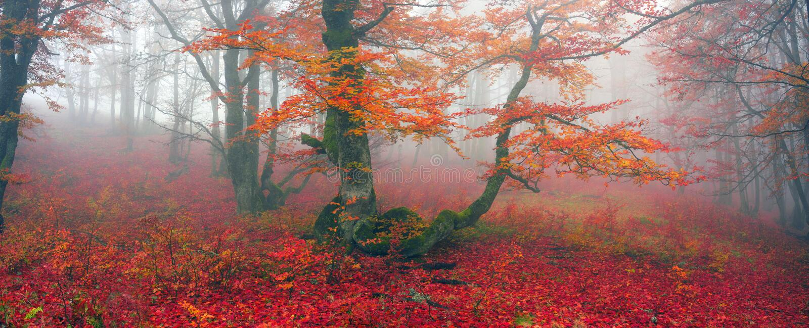 Autumn in the alpine forest royalty free stock photography