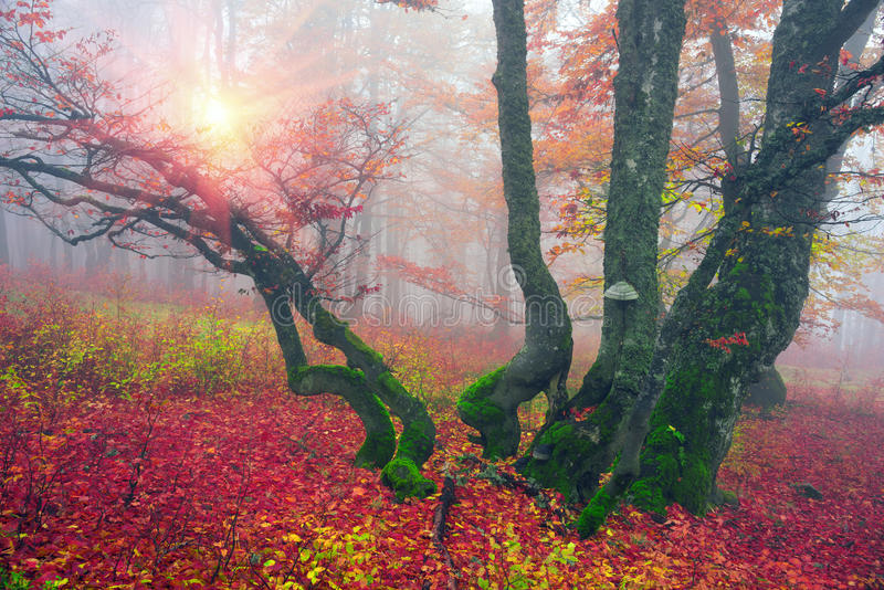 Autumn in the alpine forest stock photo