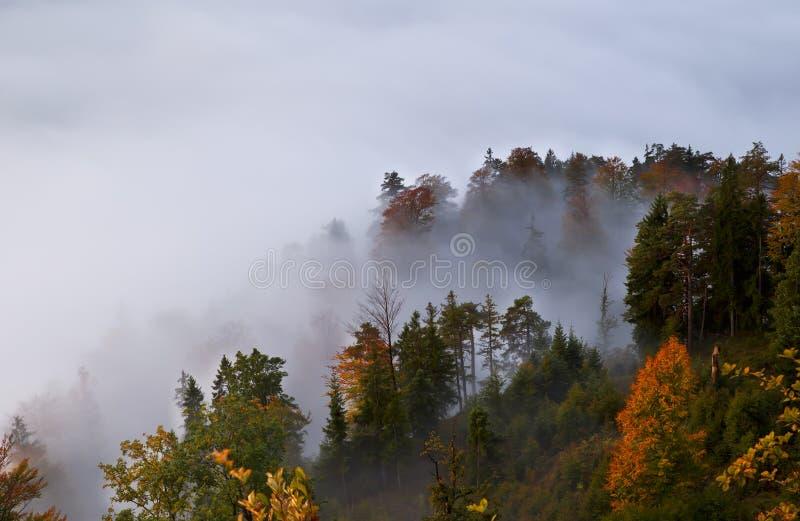 Autumn alpine forest in fog. Autumn alpine coniferous forest in fog stock photo