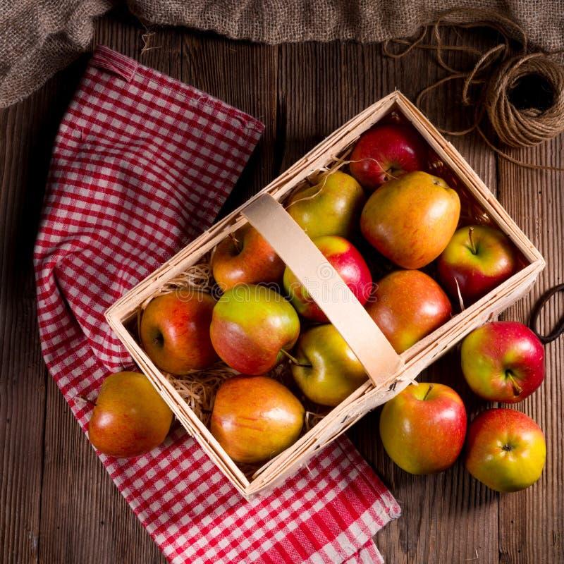 Autumn Apple. A fresh and tasty autumn Apple royalty free stock photo