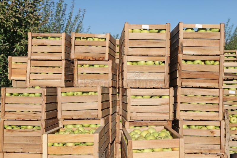 Autumn apple harvest stock images