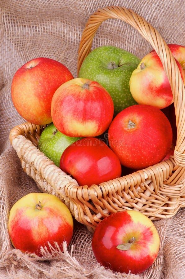 Autumn Apples foto de archivo libre de regalías