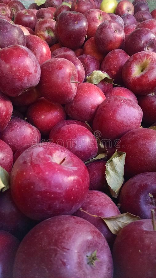 Autumn Apples lizenzfreie stockfotos