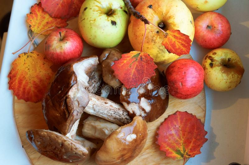 Autumn gifts of nature, autumn apples and mushrooms stock photography