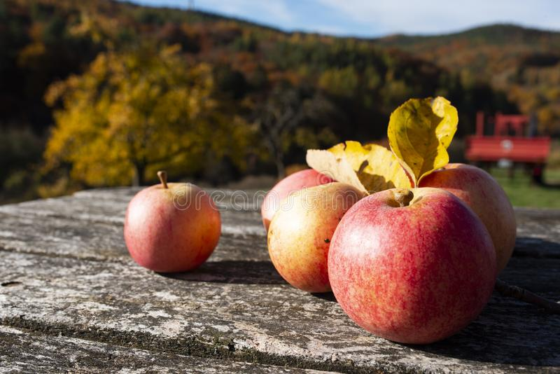 Autumn apples on old wood stock images