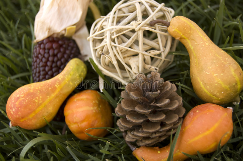 Download Autumn Arrangement stock photo. Image of harvest, halloween - 6545214