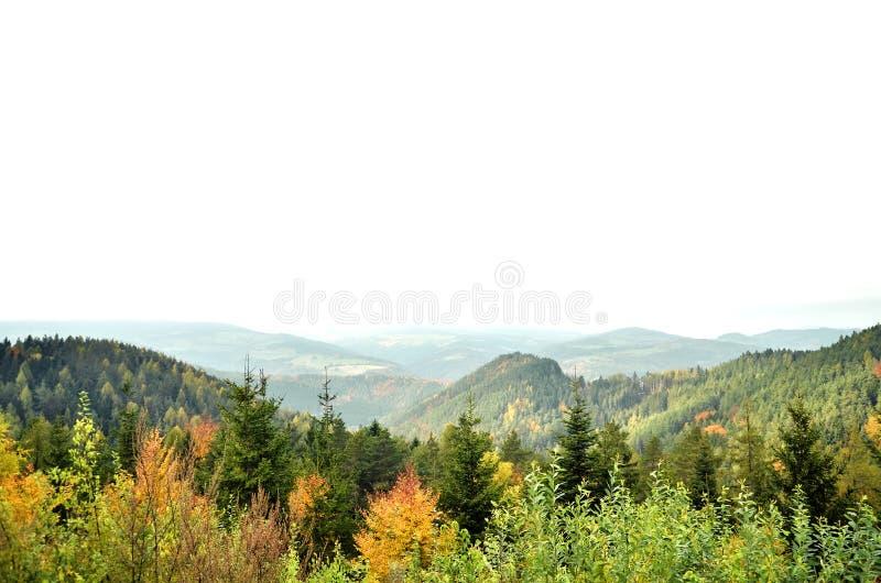 Autumn Aspen-bomen met mistige bergen op de achtergrond stock fotografie