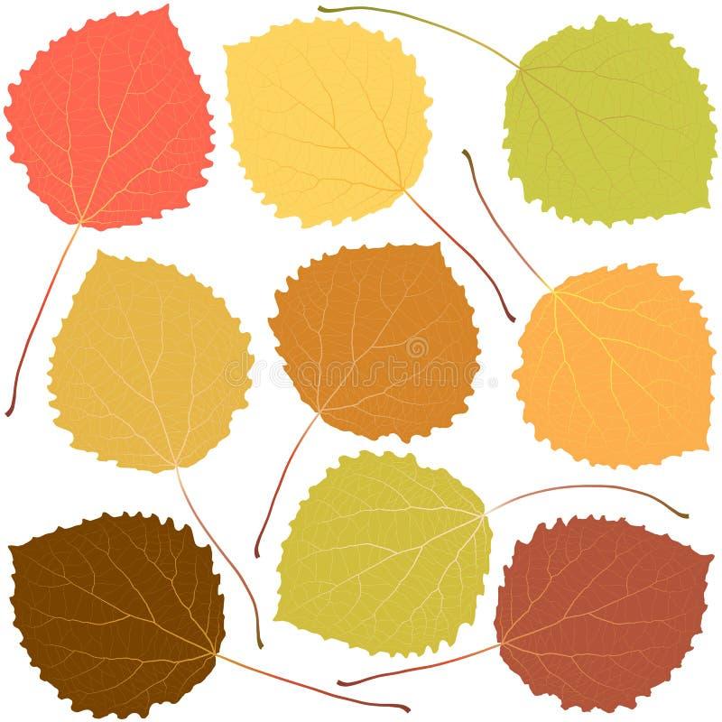 Autumn aspen leaves. Isolated on white background vector illustration