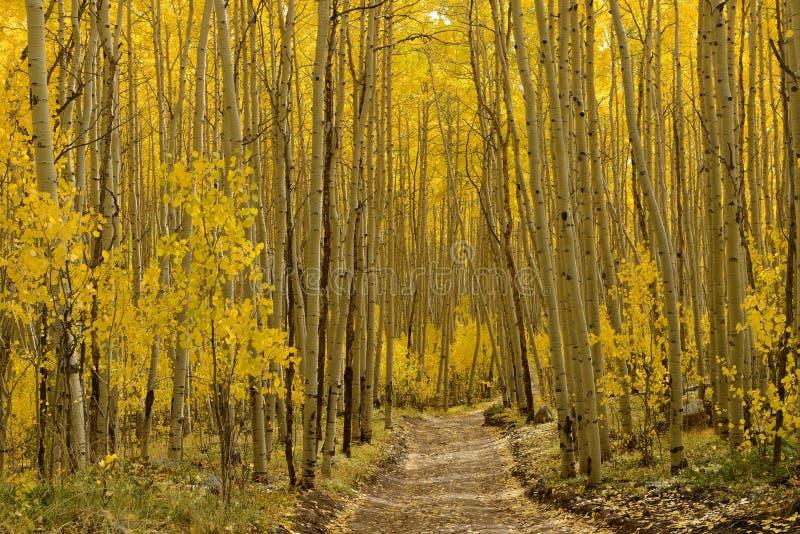 Autumn Aspen Trail - horizontal fotos de archivo libres de regalías