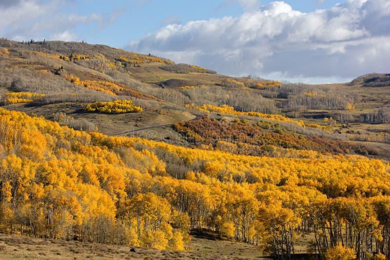 Autumn Aspen Trees photographie stock libre de droits